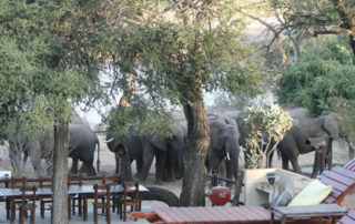 Group of Elephants at Kurhula Wildlife Lodge